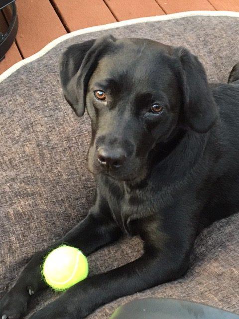 Remi:tennisball